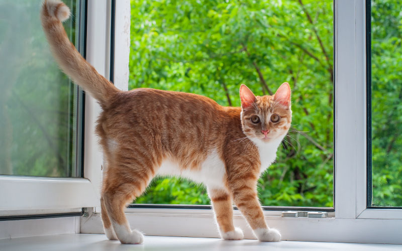 Gato cerca de la ventana